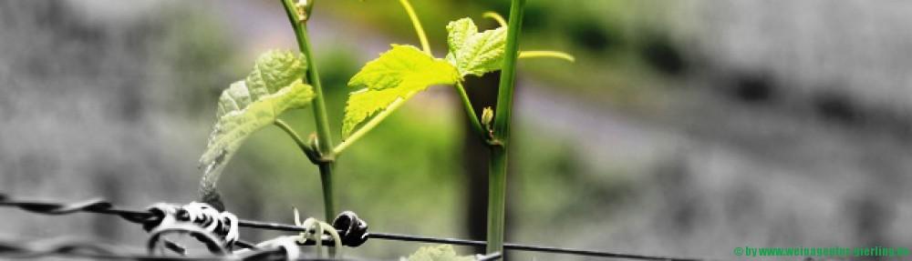 Weinagentur Gierling